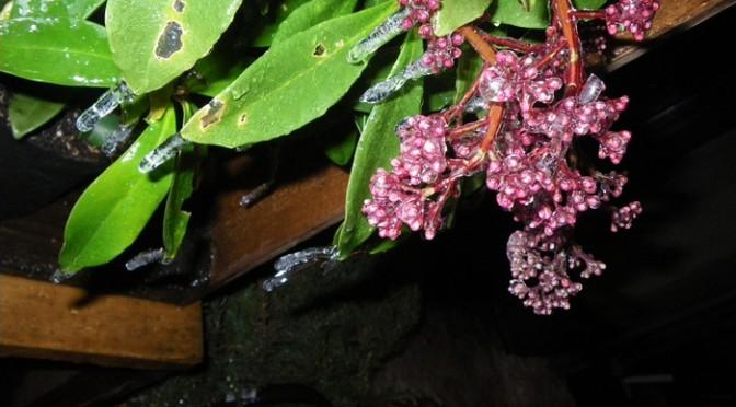 冷凍マンモスっぽくなった植物