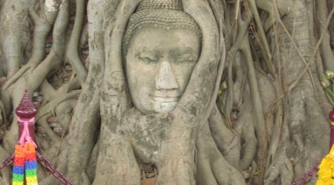 樹の根に埋まってしまった顔