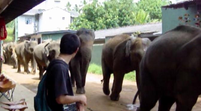 【死ぬかと思った瞬間】俺の隣を象の群れが走っていった